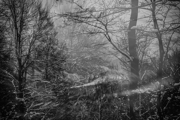 1000_Forest_36 by -Ashen-