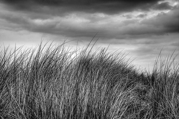 1000_Grass_4 by -Ashen-