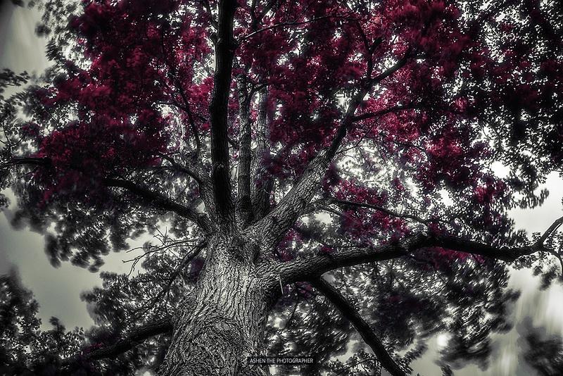 1000_Tree