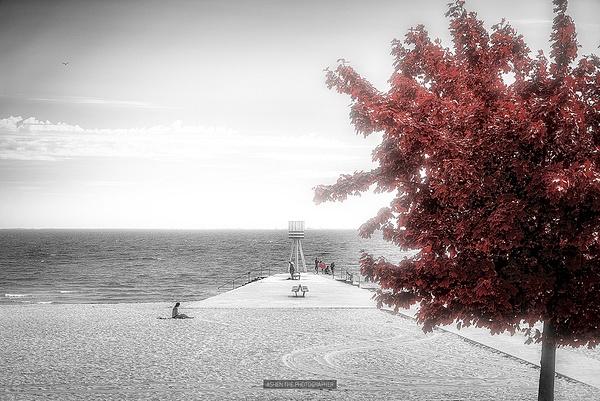 RedTree_Sea by -Ashen-