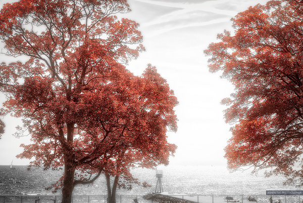 RedTrees_Sea by -Ashen-