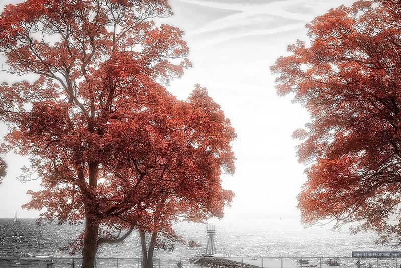 RedTrees_Sea