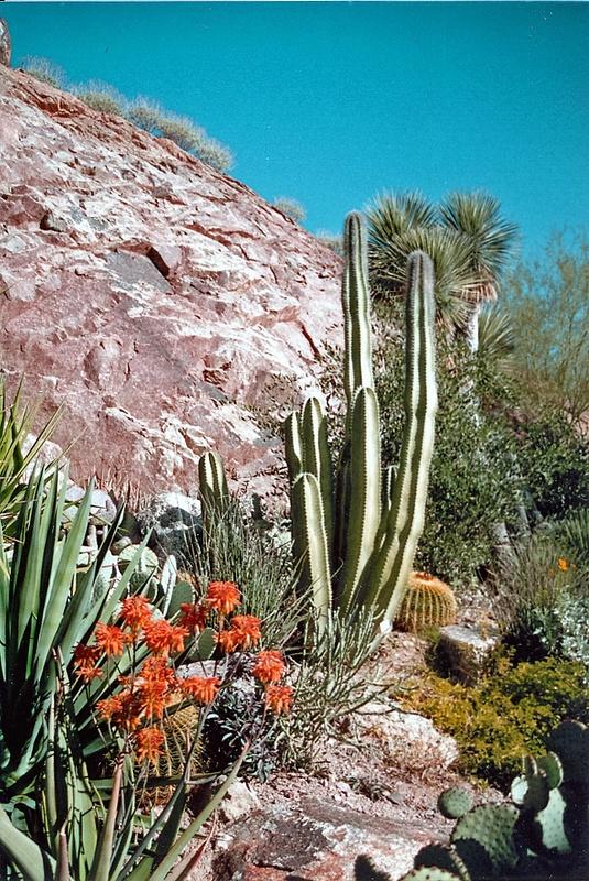 Desert_Flora_1994_(2)