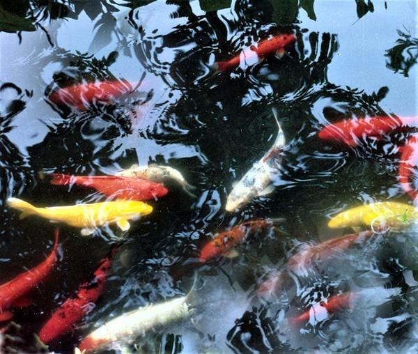 Maui Fish Pond by James Bickler