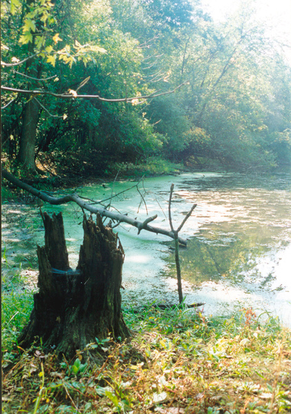 Des Plaines River B 1996 by James Bickler