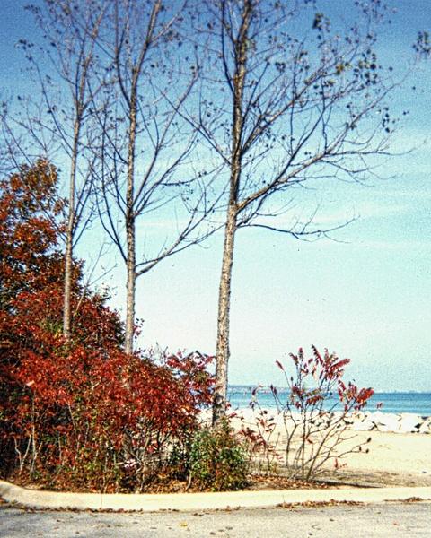 LF Beach123(A)_pe by James Bickler