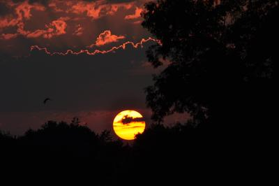 Phases of setting sun, as shot