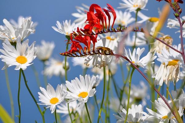 Natures Bouquet.