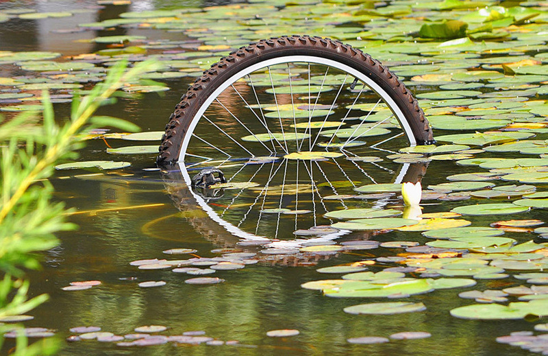 Bicycle Tire and Lily Pads