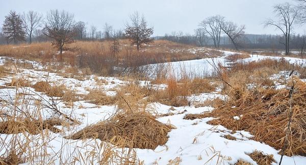Winter Bog by GeneGabry
