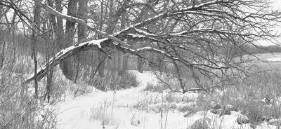 B&W Winter Scenes