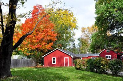 Autumn In My Neighborhood