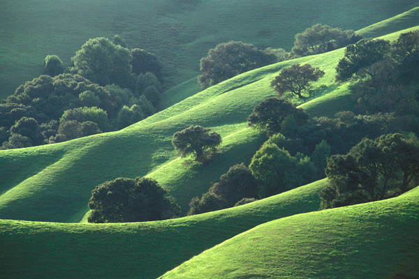 Oak trees and green grass on hills in spring by...