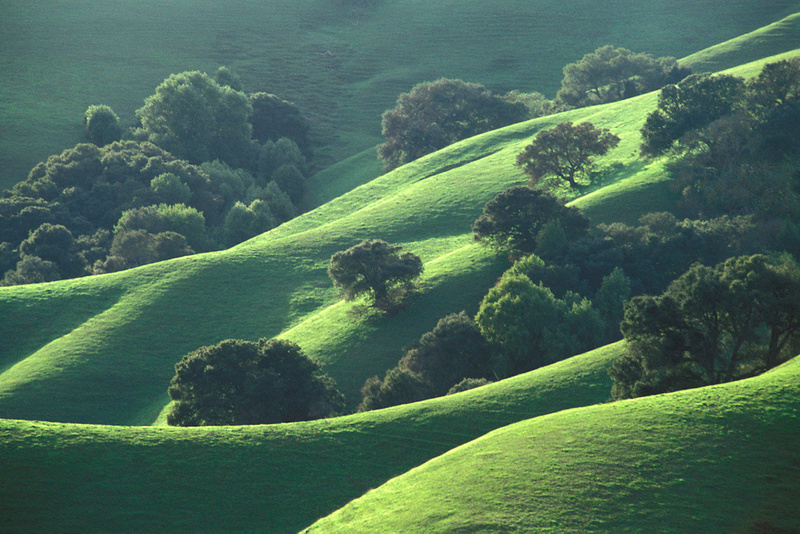 Oak trees and green grass on hills in spring