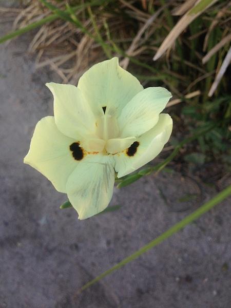 Flowers by Alexasfour1