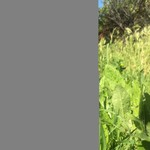 Julian Llaneta Period 5 Irish/Green