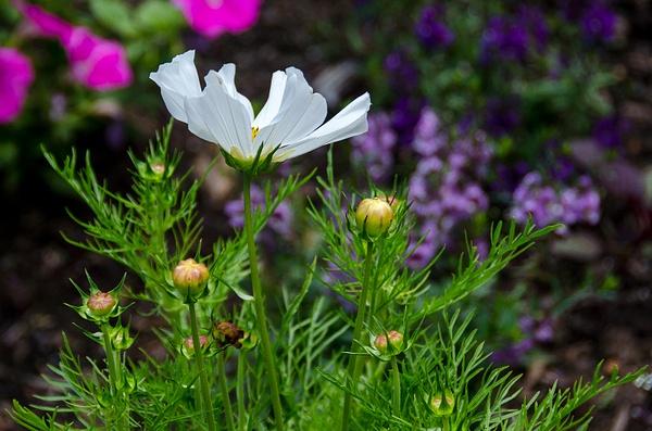 Flowers by ClipperK