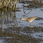 Water & Shore Birds