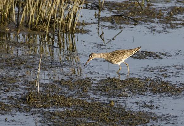 Water & Shore Birds by ClipperK