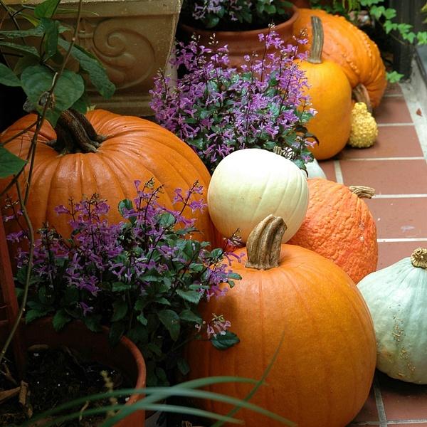 Pumpkins by LensCraft