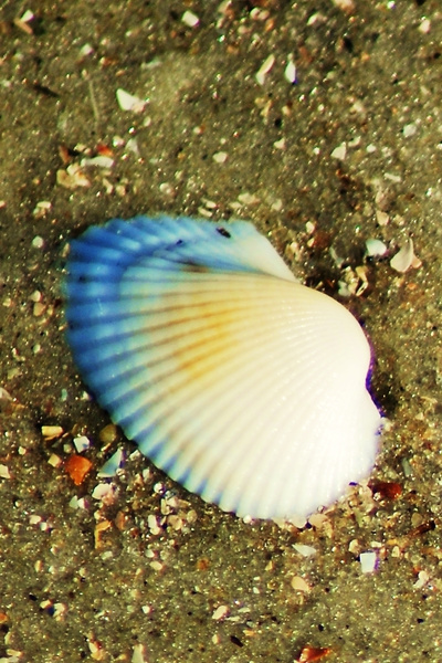 Shell_01 by LensCraft