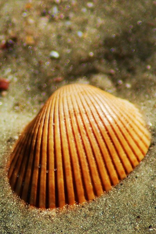 Shell_02