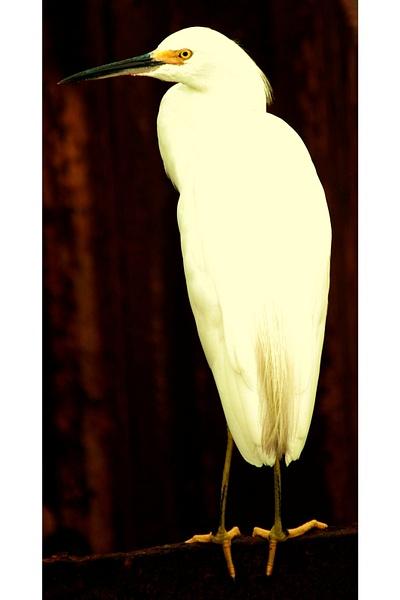 White_Bird_Edit_03 by LensCraft