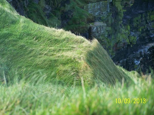 Ireland Trip 125 by Carol Alexander