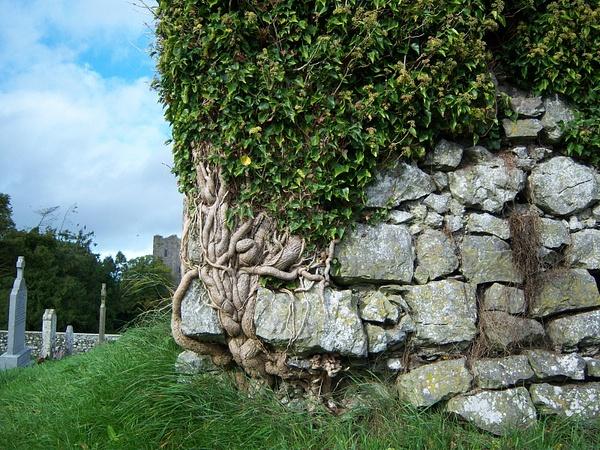 Ireland Trip 024 by Carol Alexander