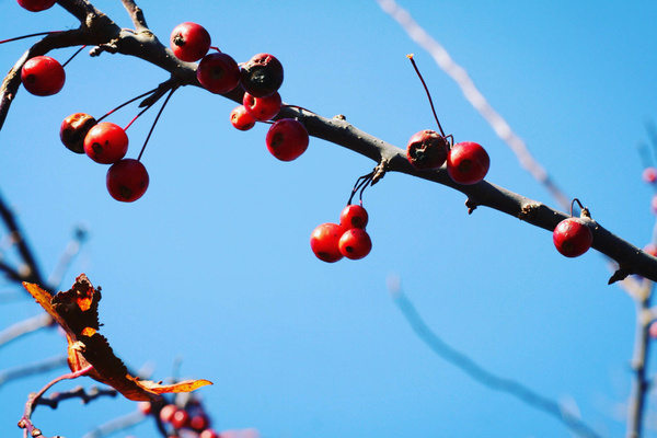 berries by LeslieElliott