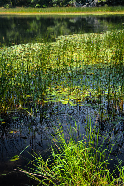 2 Cape Cod Pond by SusanAudette91359