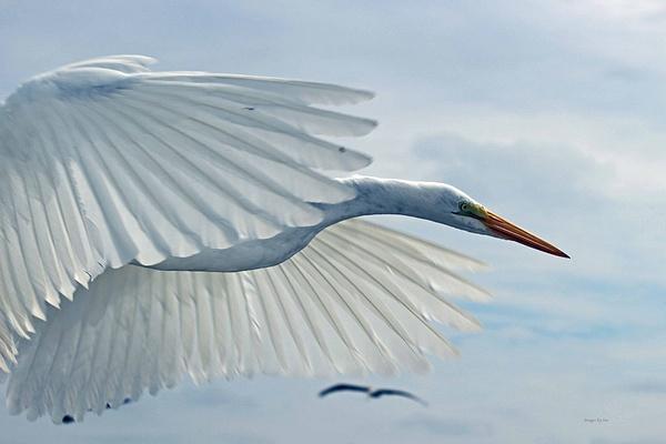 5 The Egret by SusanAudette91359