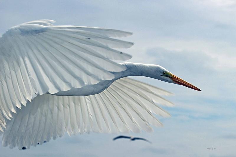 5 The Egret