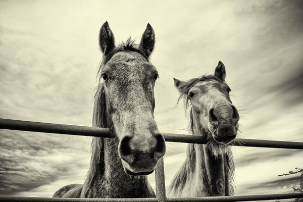 Horses by Thcphoto
