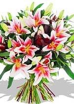 pink lily by Karachigifts