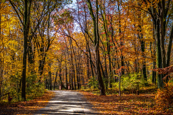 Fall Road (1 of 1) by OraDavis