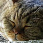 My cat Filimon