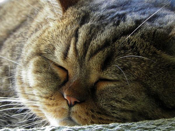 My cat Filimon by Clarita