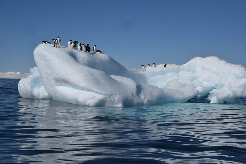 Adeelie Penguins, Antarctica