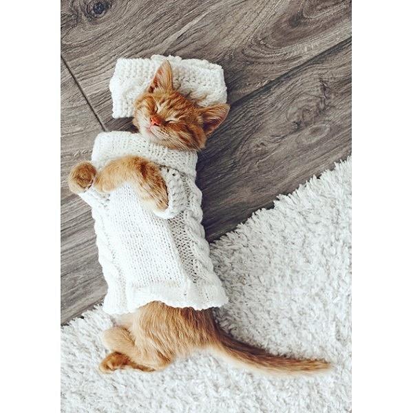 cat on the floor-1-600x600 by Regina3