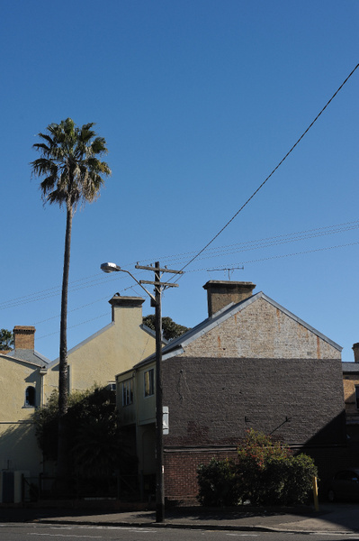 solitary palm in Newtown by ben morgan
