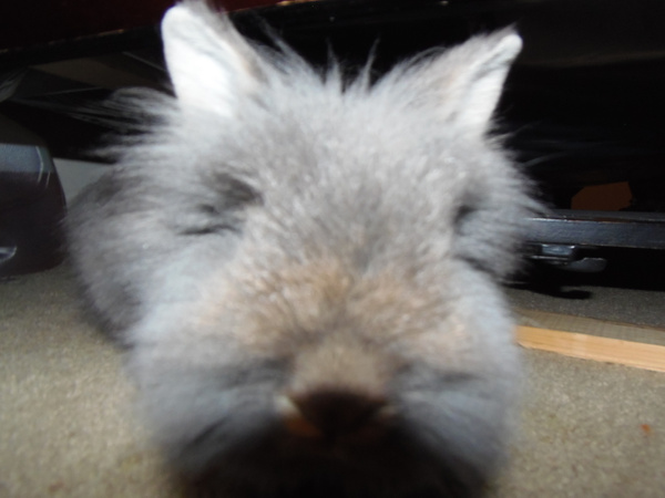 Fuzzy bunny by 3vtapestry