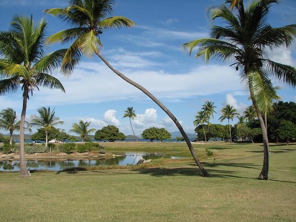 Beach Across The Lawn by Vernon Adams