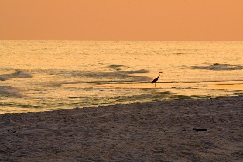 Sea Grove