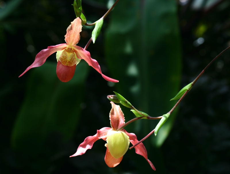 Orchid Pair