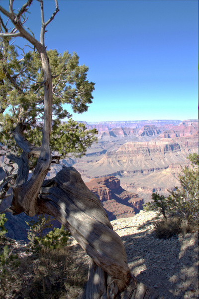 Grand Canyon by Vernon Adams