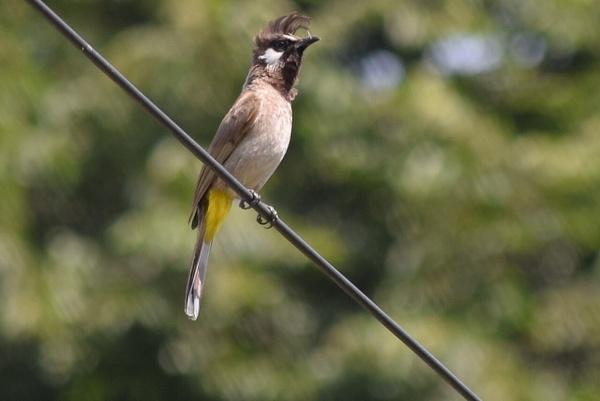 My Birds by Selvarajan