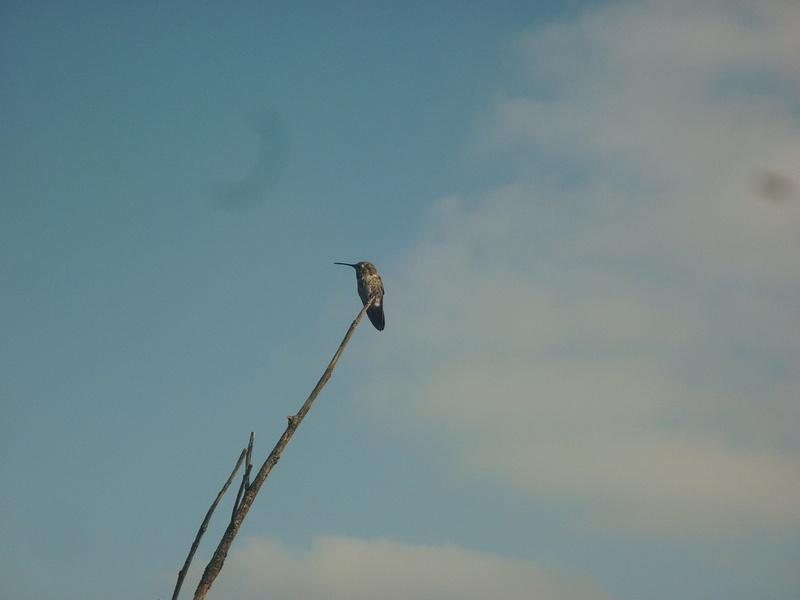tweetybird