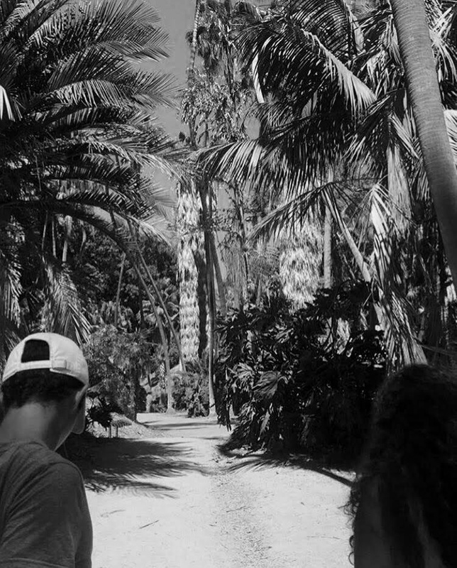 Balboa Palm Trees