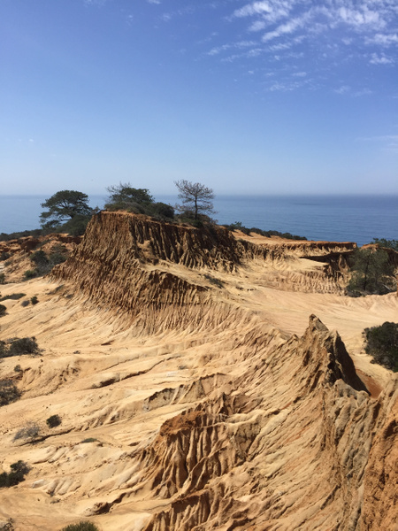 Torrey Pines Trail by NeoFeP2